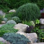 Lush-garden-pond-with-ample-plant-life