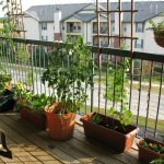 Potted-plants-give-an-urban-balcony-a-charming-green-vibrancy