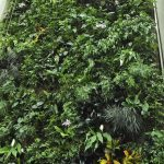 gallery-1514594439-living-wall-of-plants
