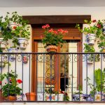 Urban-balcony-garden-with-blooming-florals-